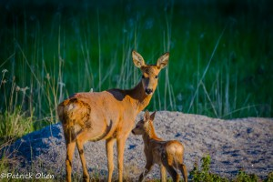 Bambi & Mamma.