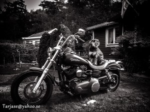 Let´s Ride..