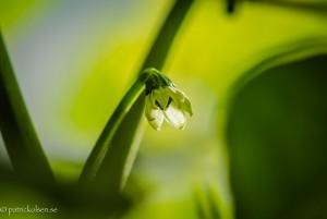 Chilliflower04