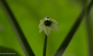Chilliflower05